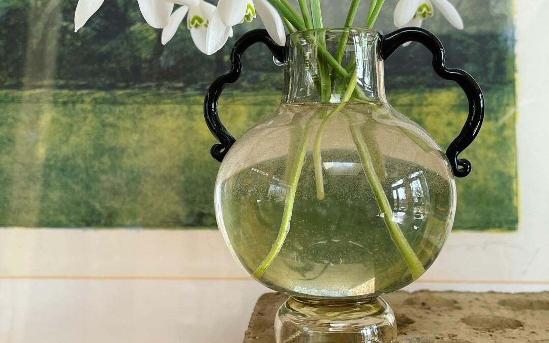 Galanthus elwesii, turkisk snödroppe